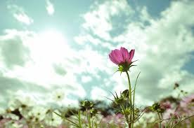 選んで喜んでもらえるお花